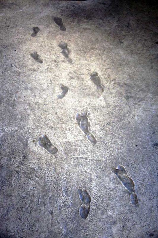 Earliest known human footprints (Australopithecus afarensis) at the Smithsonian National Museum of Natural History