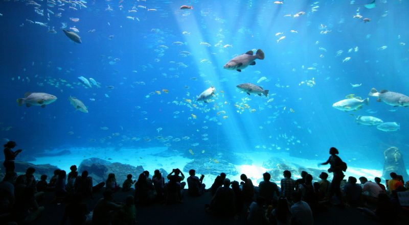 Science and theological education: Learning theology at the aquarium